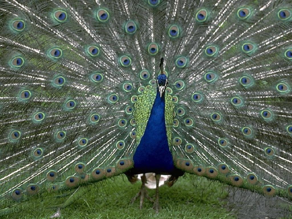 фото экзотических птиц с названиями